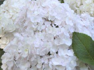 Endless Summer Blushing Bride